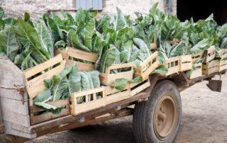 Chariot pour récolte