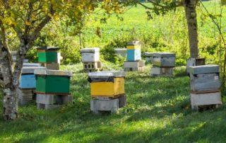 Ruches à miel